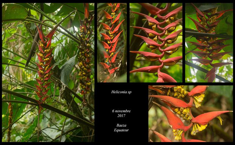 Voyage en Equateur. - Page 3 Helico17