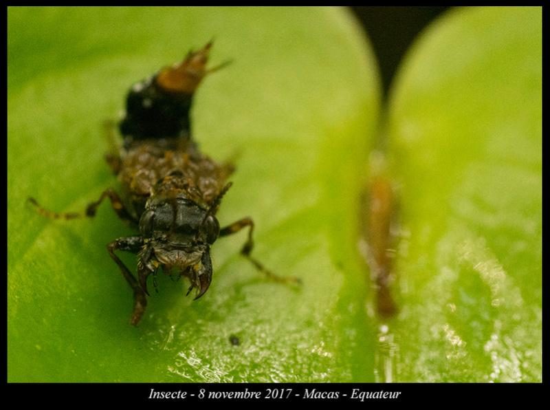 Voyage en Equateur. - Page 3 Insect10