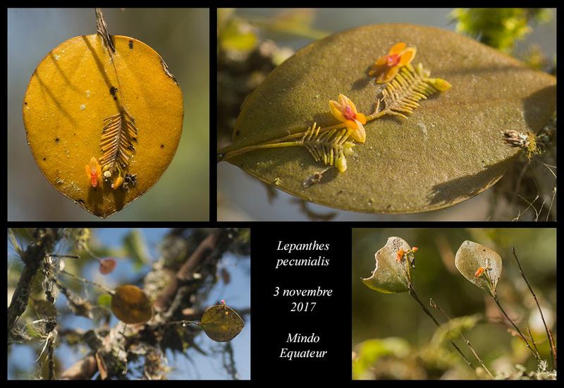 Voyage en Equateur. Lepant11