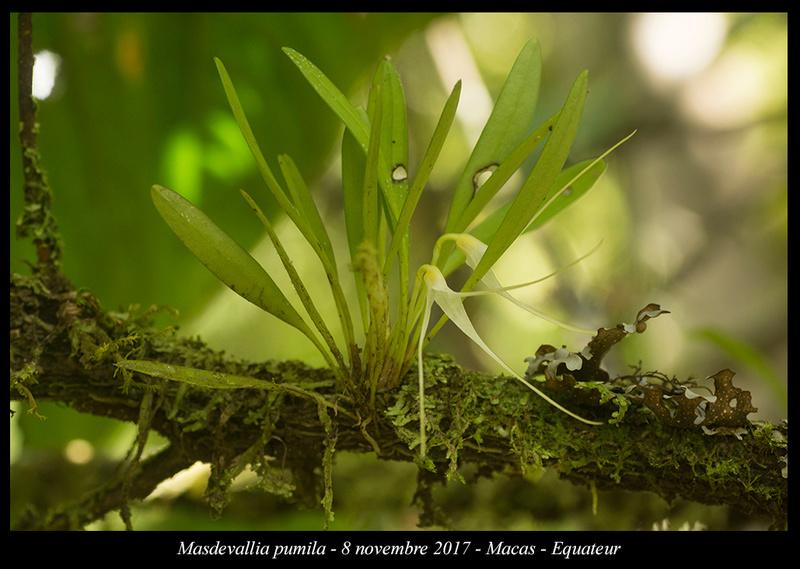 Voyage en Equateur. Masdev14