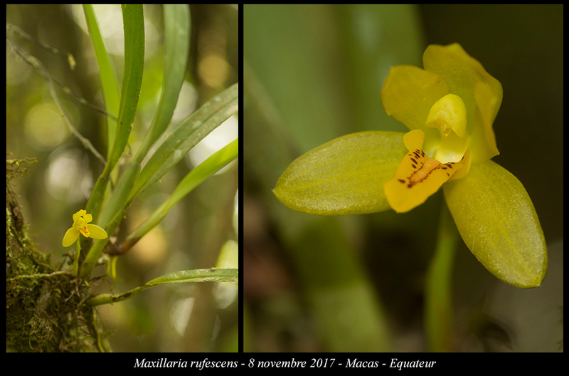 Voyage en Equateur. Maxill22