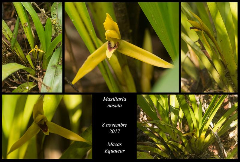Voyage en Equateur. Maxill30
