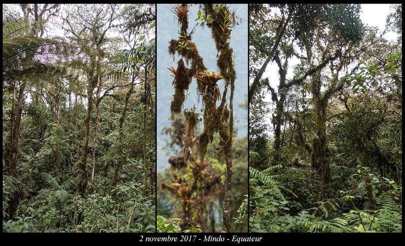 Voyage en Equateur. - Page 2 Mindo210