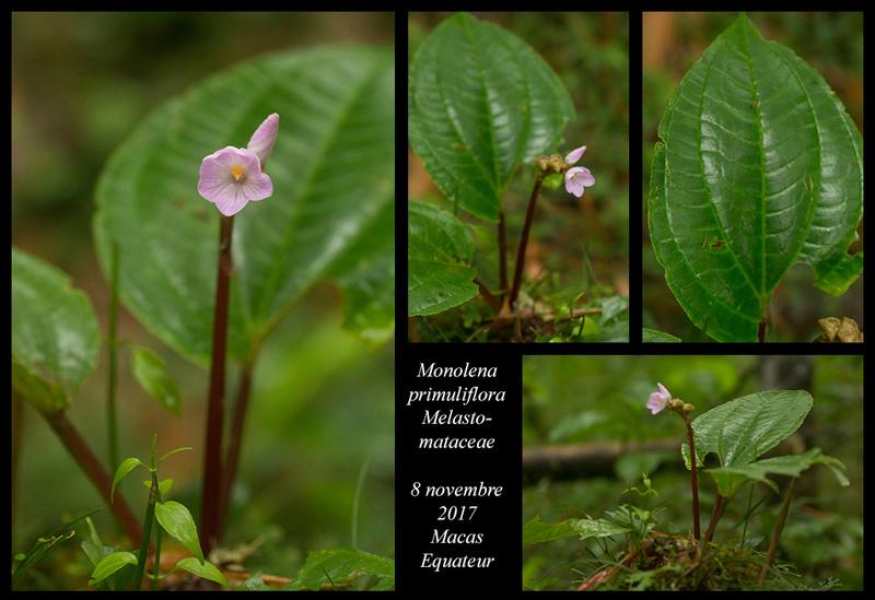 Voyage en Equateur. - Page 3 Monole10