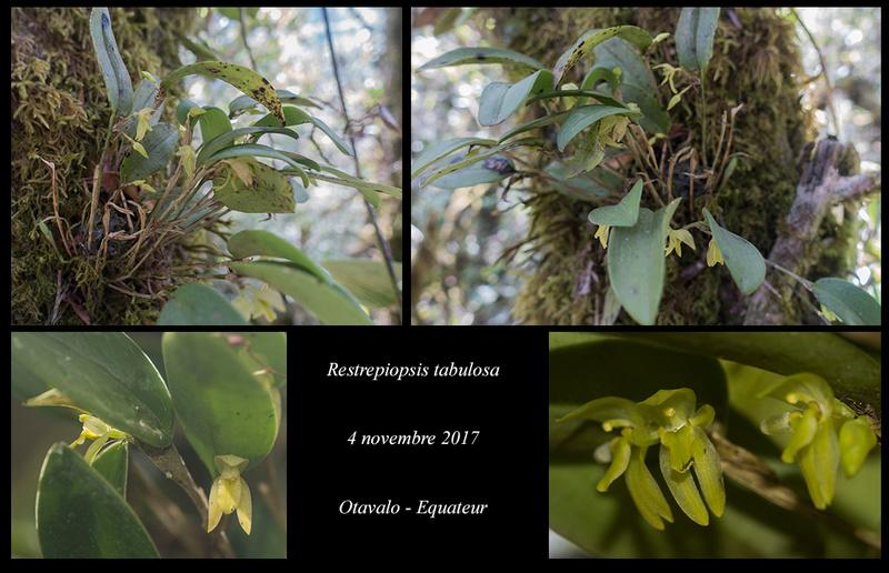 Voyage en Equateur. Restre15