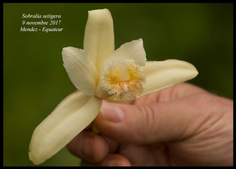 Voyage en Equateur. Sobral15