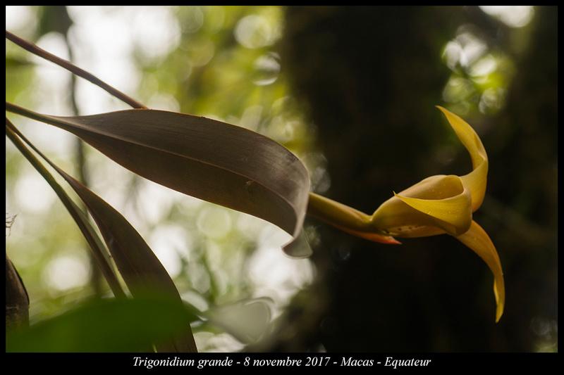 Voyage en Equateur. Trigon10
