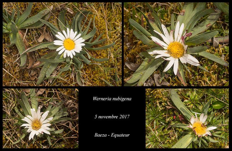 Voyage en Equateur. Werner13