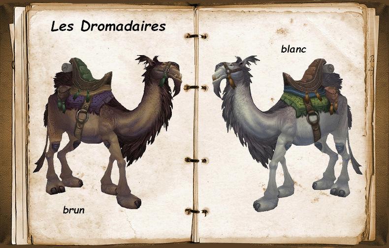 Les dromadaires Dromad10