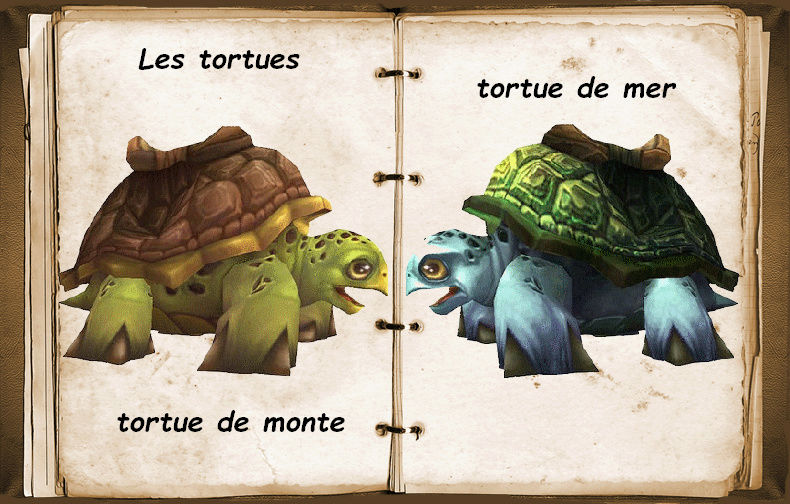 Les tortues Tortue13
