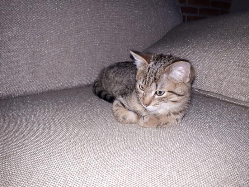 Nelcy, née le 22 août 2017  20180113