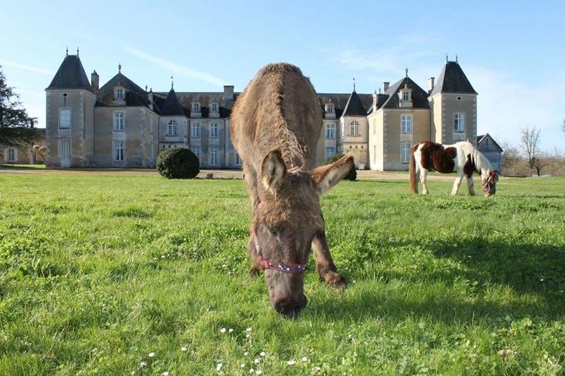 Les ânes, nos grandes oreilles adorées! 12742010