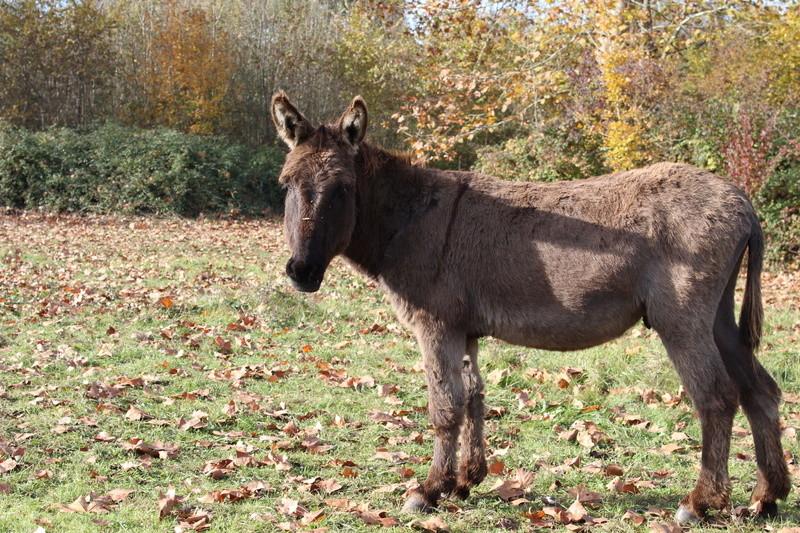 Les ânes, nos grandes oreilles adorées! Img_0017