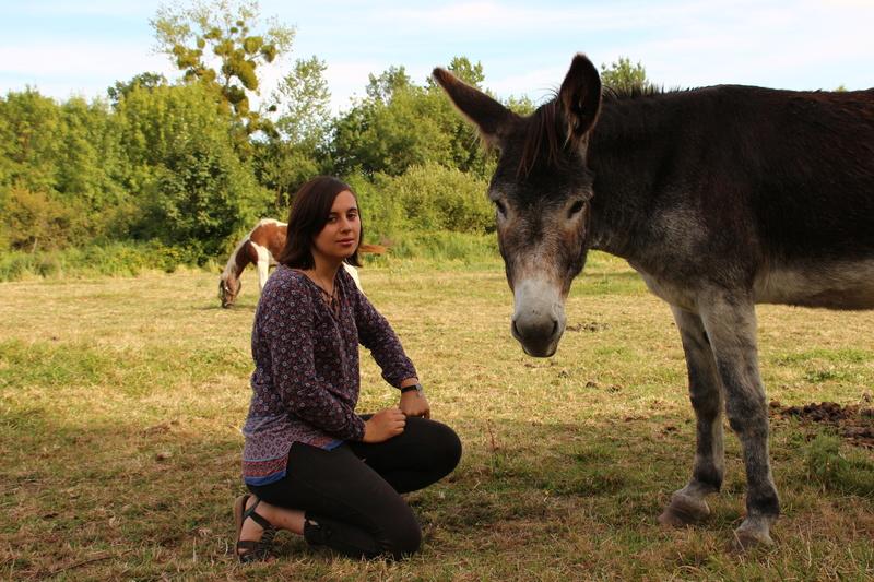 Les ânes, nos grandes oreilles adorées! Img_2710