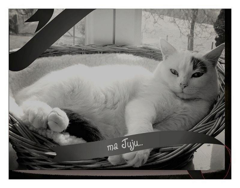 Hyperthyroïdie chez le chat - Page 12 Ma_juj10