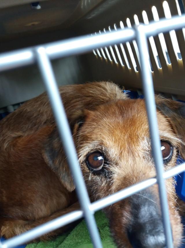 Arrivée camion des chiens Serbes de BELLA le 28 avril 2018 - Page 3 20180441