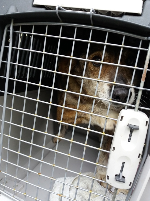 Arrivée camion des chiens Serbes de BELLA le 28 avril 2018 - Page 3 20180443
