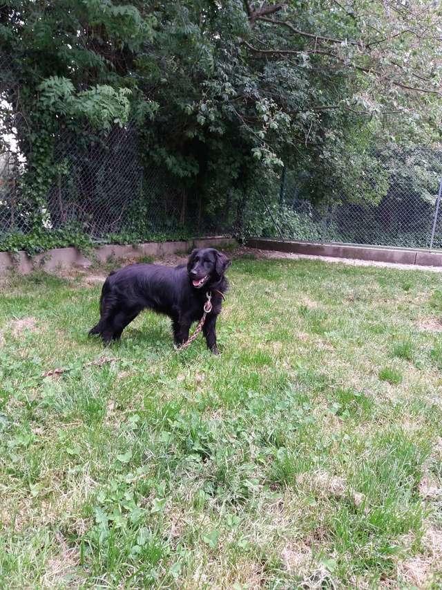 Arrivée camion des chiens Serbes de BELLA le 28 avril 2018 - Page 3 31562710