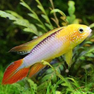 Nom de poisson  484310