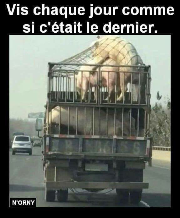 Le coin Humour  - Page 8 5a159d10