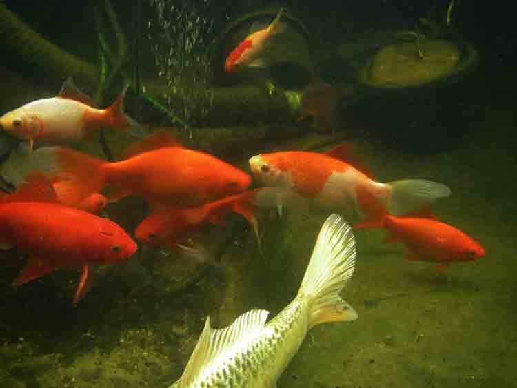 Montrez vos Aquariums Bassin10