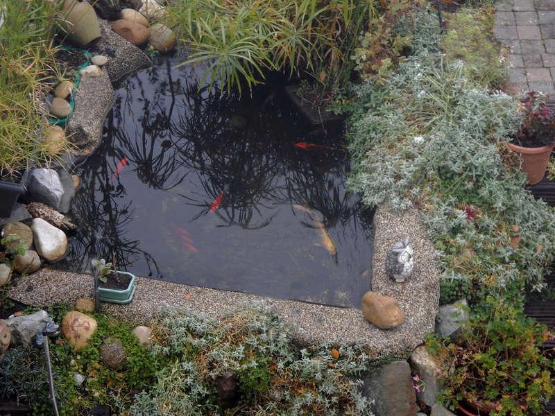 Montrez vos Aquariums Bassin11
