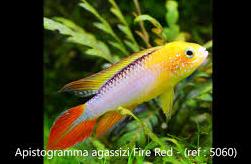 Nom de poisson  Captu193