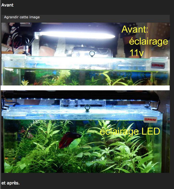 Aquarium 250 l - Page 3 Captu995