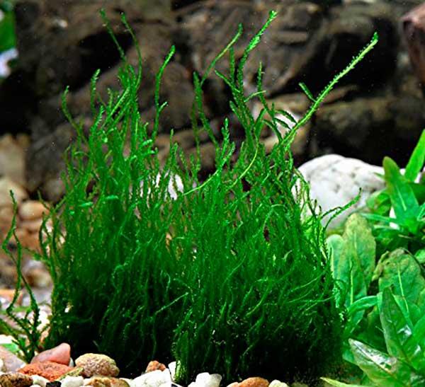 besoin de votre aide pour mon aquarium de 130 l Denner10