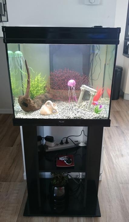Aquarium pour un novice, eau trouble Dsc_0010