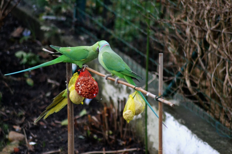 visite d'hiver au jardin  Dsc_0032