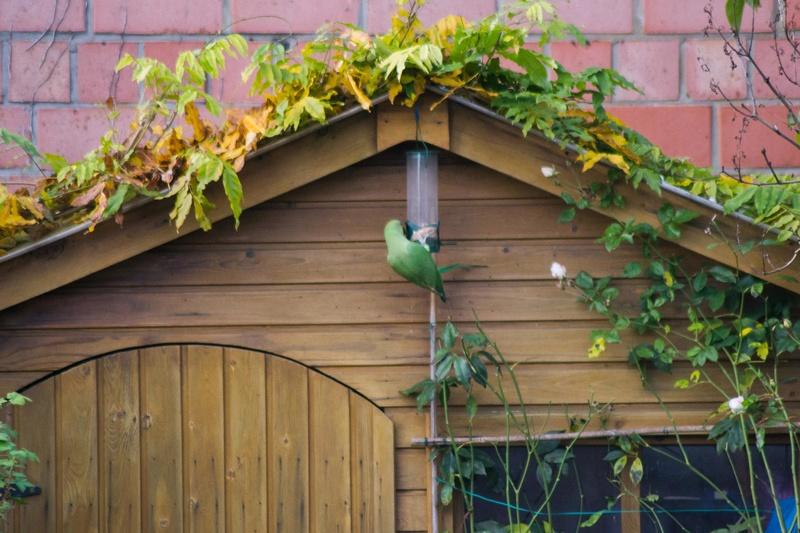 visite d'hiver au jardin  Dsc_0034