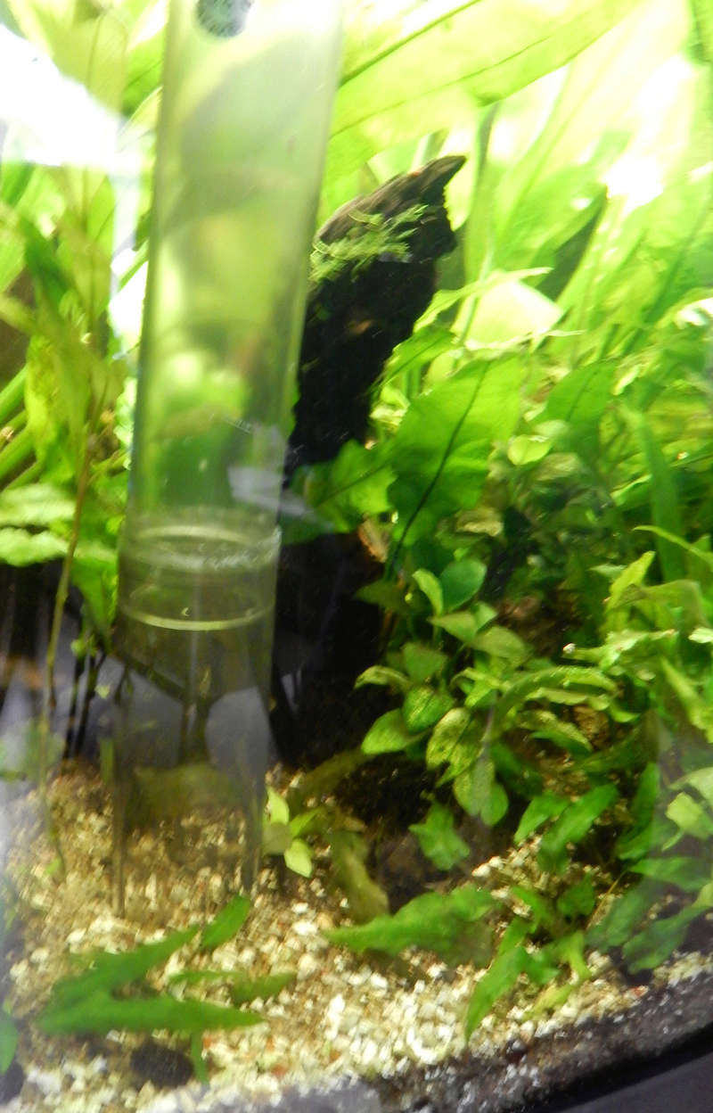 besoin de votre aide pour mon aquarium de 130 l Dscn1816