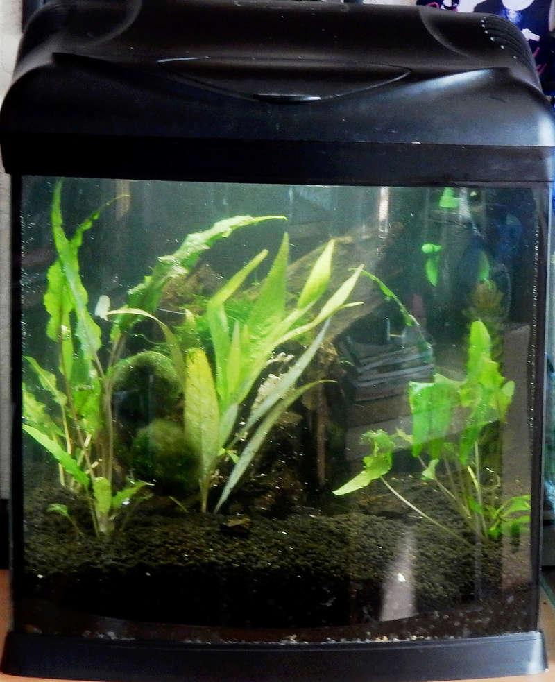 Mise en route d'un 3eme aquarium  Dscn2030