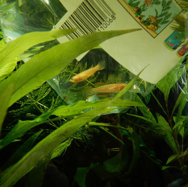 Aquarium Killie Gardeneri  Dscn2034