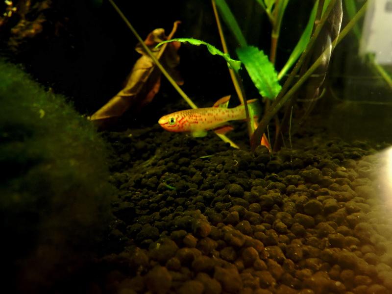 Aquarium Killie Gardeneri  Dscn2048
