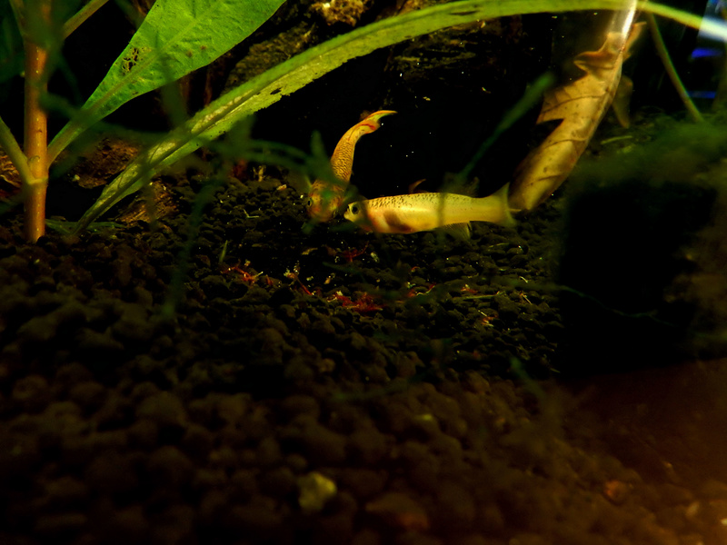 Aquarium Killie Gardeneri  Dscn2050