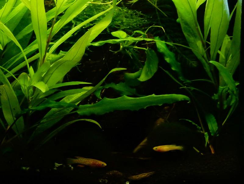 Aquarium Killie Gardeneri  Dscn2115