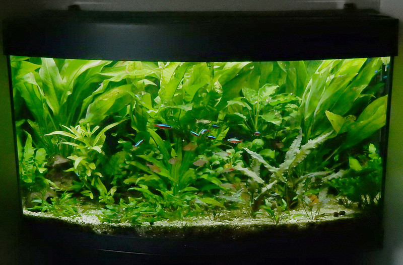 Aquarium 250 l - Page 3 Dscn2125