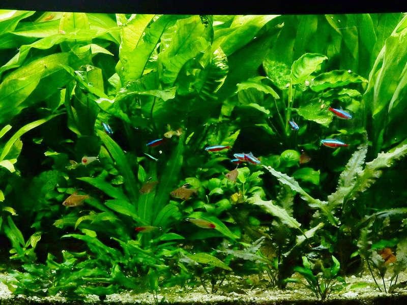 Aquarium 250 l - Page 3 Dscn2126