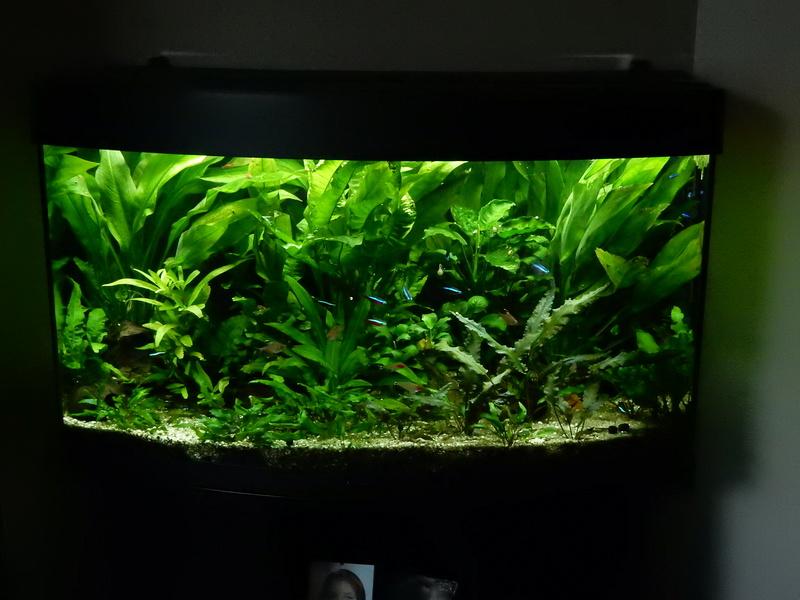 Aquarium 250 l - Page 3 Dscn2127