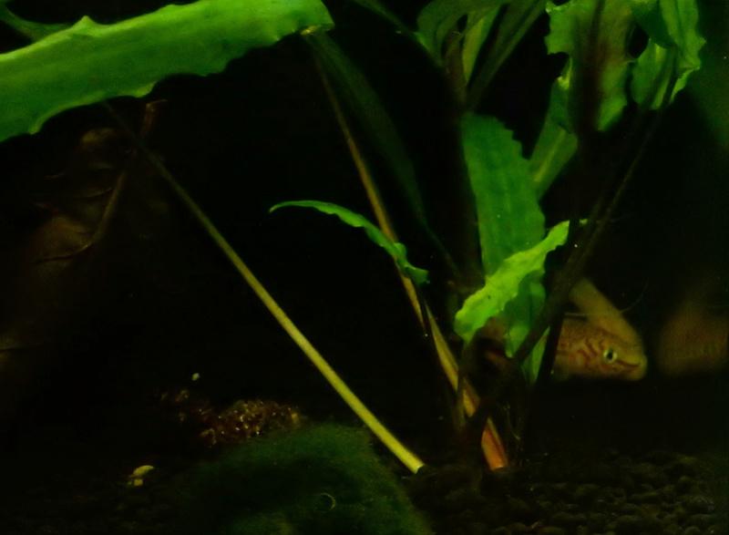 Aquarium Killie Gardeneri  Dscn2211