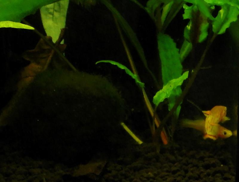Aquarium Killie Gardeneri  Dscn2214