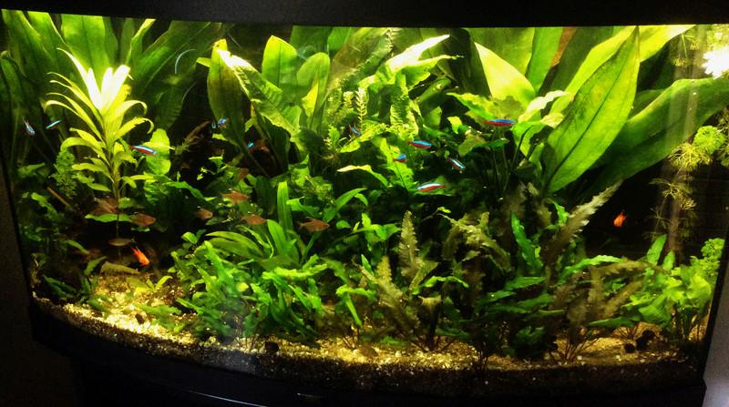 Montrez vos Aquariums Juwel211