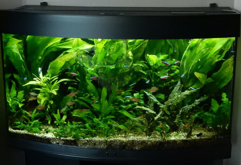 Montrez vos Aquariums Juweld13