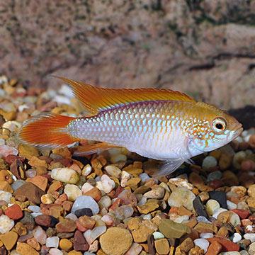 Nom de poisson  P_fire10