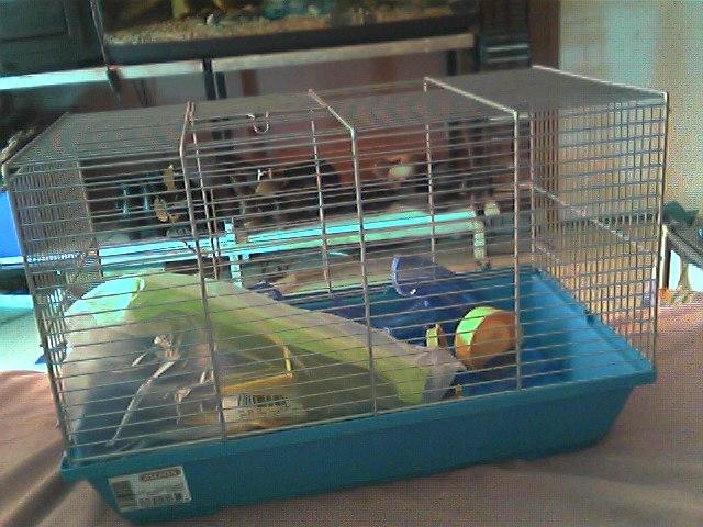 vend cage petit rongeur Snapsh10