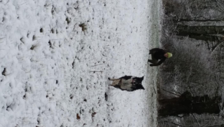 DJIMBO (mâle croisé border) 20180211