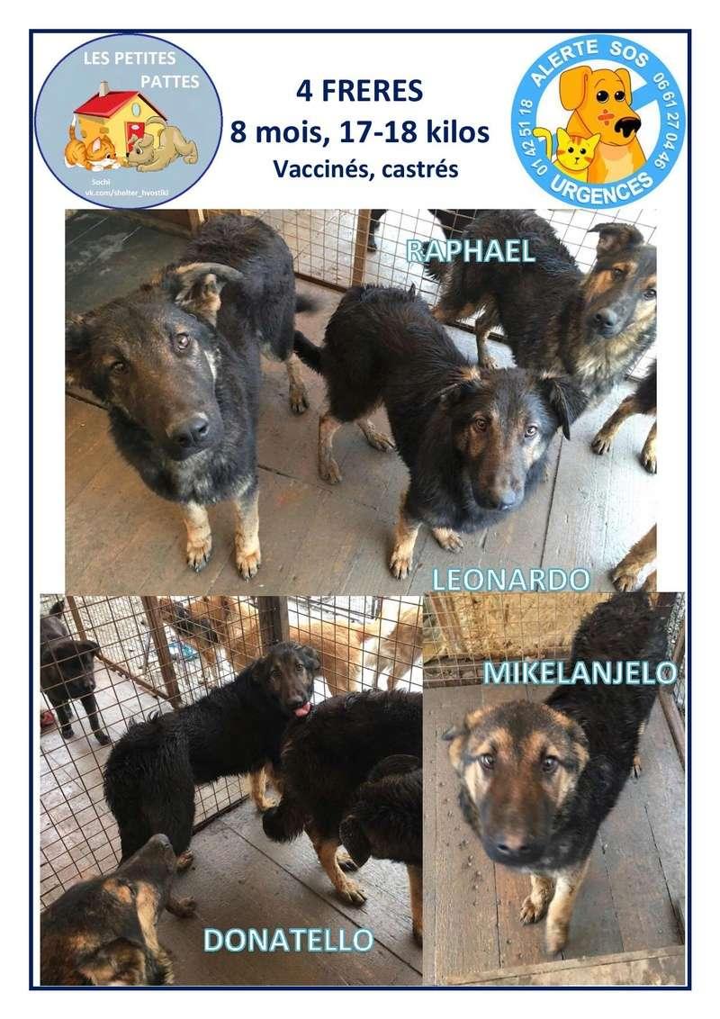 RAPHAEL, LEONARDO, MIKELANJELO, DONATELLO, mâles croisés 8 mois 4_frer11