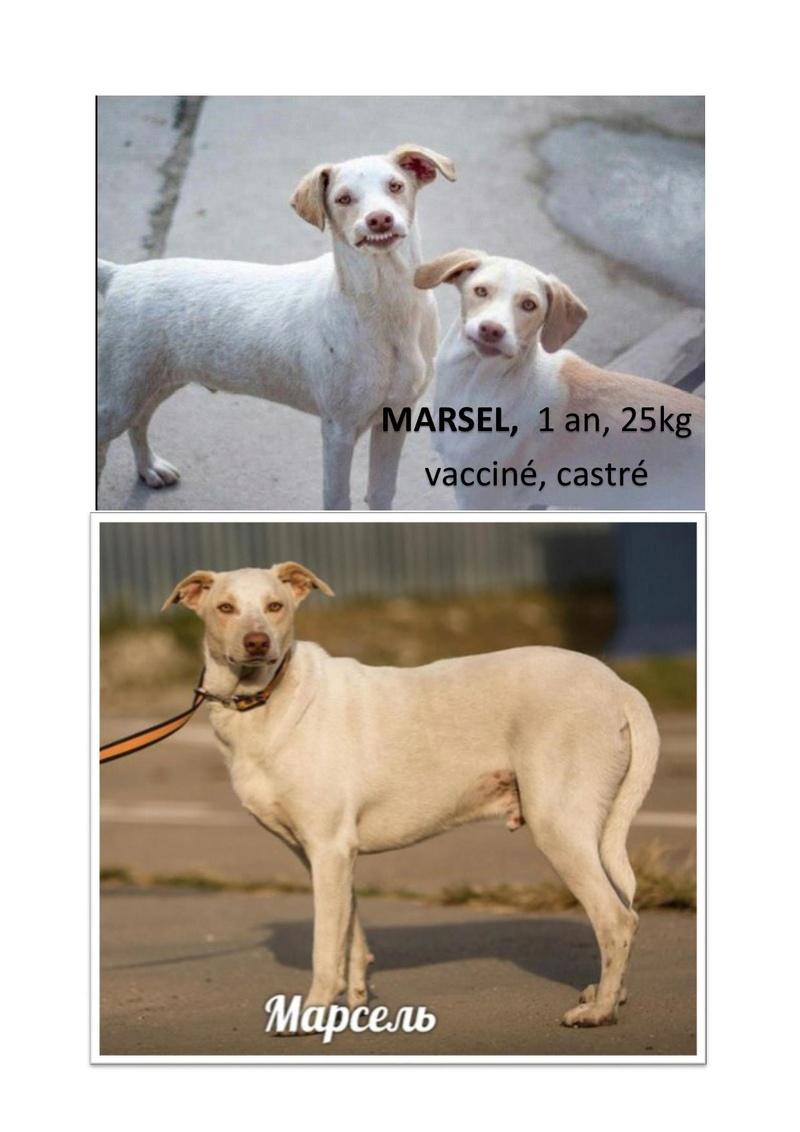MARSEL, mâle croisé 1 an Marsel10